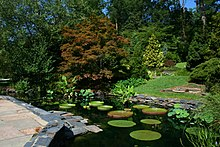 A Lilly pond and stoned walkway with various trees in the background