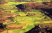 colorful rice paddies cover rolling hills