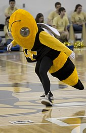 A person wearing a costume which resembles a yellowjacket, including a black shirt with yellow interlocking G-T logo, spins a dial on a wooden gymnasium floor.